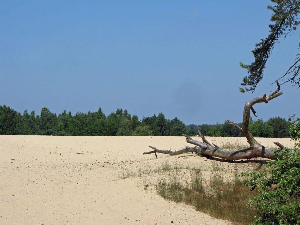 Drunen Nationaal Park (Duinen van Loon)